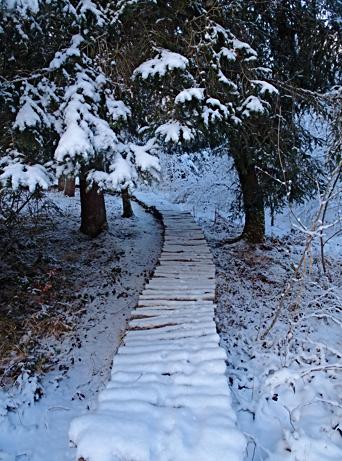 Auf dem verschneiten Moorlehrpfad in Benediktbeuern