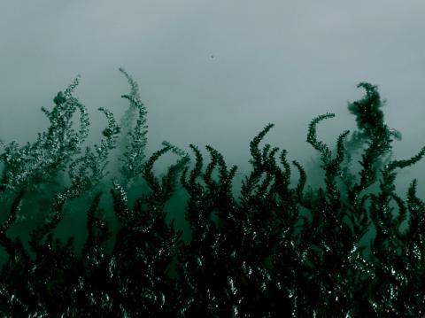 Algen in Venedigs Lagune