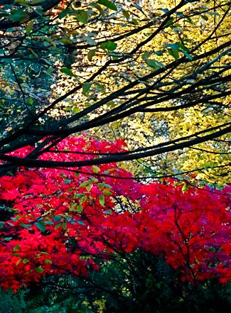 Herbst am Südfriedhof Essen