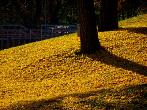 Herbst im Olympiapark München