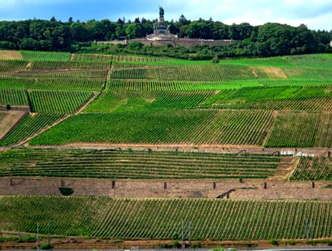 Niederwalddenkmal und Weinbau in Rüdesheim