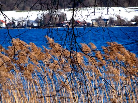 Das Starnberger Seeufer im Bernrieder Park