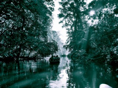 Tortuguero River