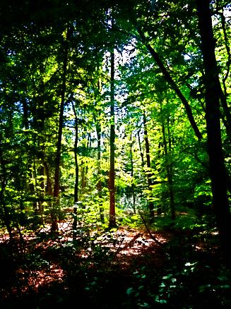 Pullacher Forst