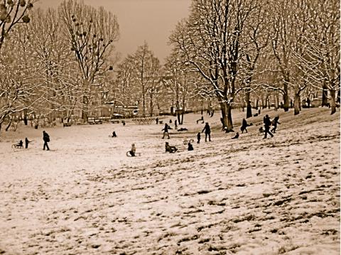 Rodel im Maßmannpark