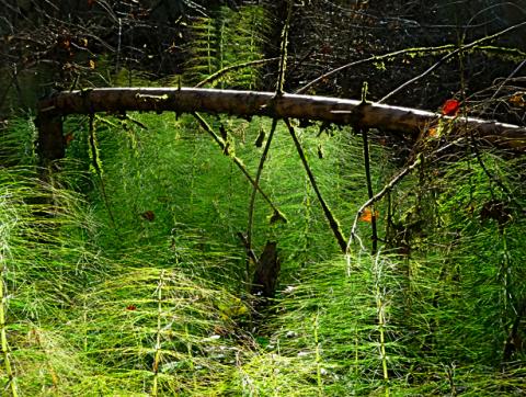 Im Auwald bei Icking