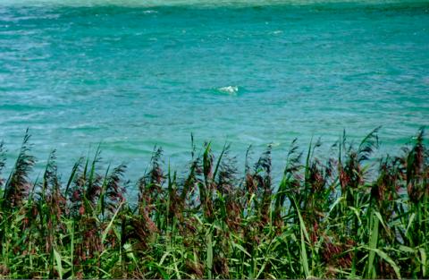 Am Strand vom Walchensee