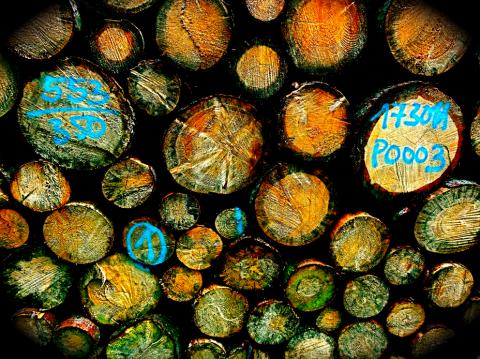 Holz ohne die 7 Todsünden