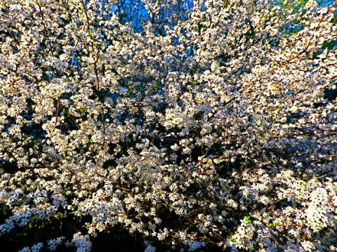 Ruhpolding Frühlingsblüte