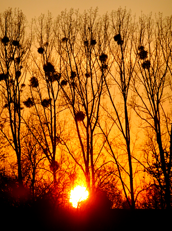 Sonnenuntergang am Olympiapark