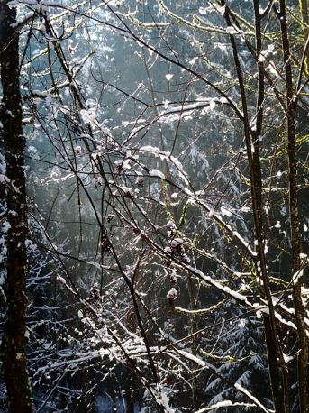 Letzter Neuschnee im Wald der Hohenburg/Lenggries