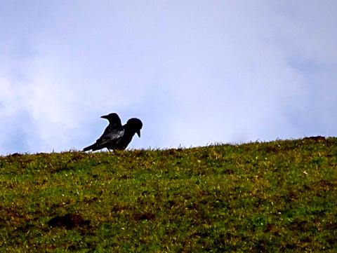 Krähen auf dem Wanderweg zur Bauernrast