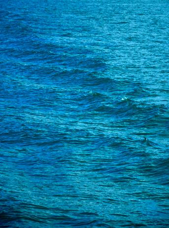 Wasserqualität Zürcher See