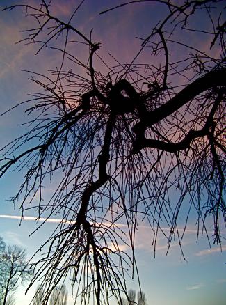 Baum im Englischen Garten