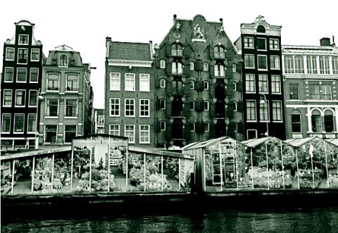 Amsterdamer Tulpenmarkt