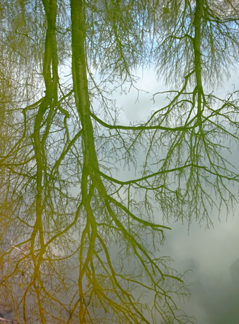 Spiegelnde Bäume im Eiskanal im Englischen Garten