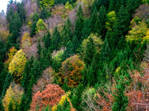 Wald bei der Ruine Hohenwaldeck am Schliersee