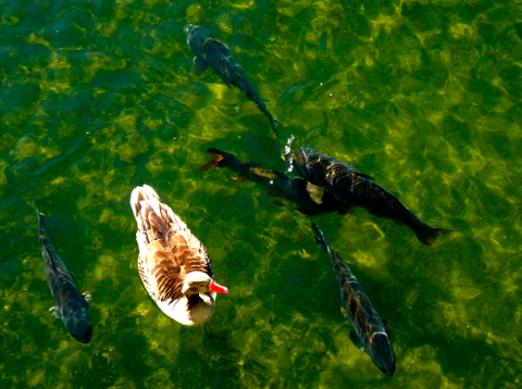 Fauna im Olympiasee