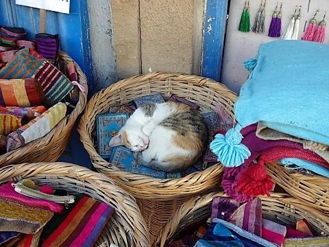 Schlafende Katze im Souk von Essaouira